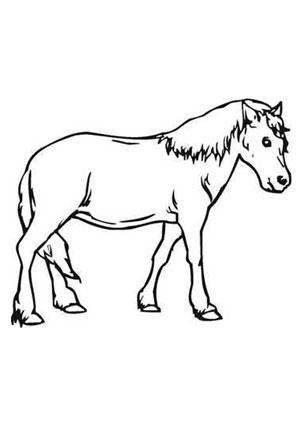 Ausmalbilder Braunes Pony - Pferde Malvorlagen