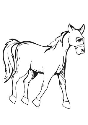 Ausmalbilder Fohlen Pferde Malvorlagen
