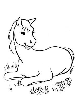 Ausmalbilder Liegendes Fohlen Pferde Malvorlagen