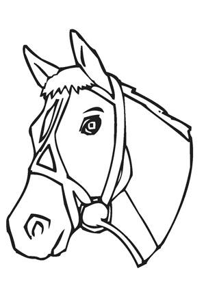 Ausmalbilder Pferdekopf Mit Halfter Pferde Malvorlagen