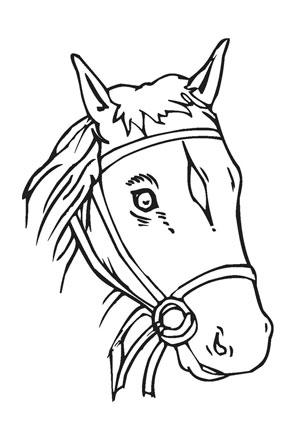 Ausmalbilder Süsser Pferdekopf Pferde Malvorlagen